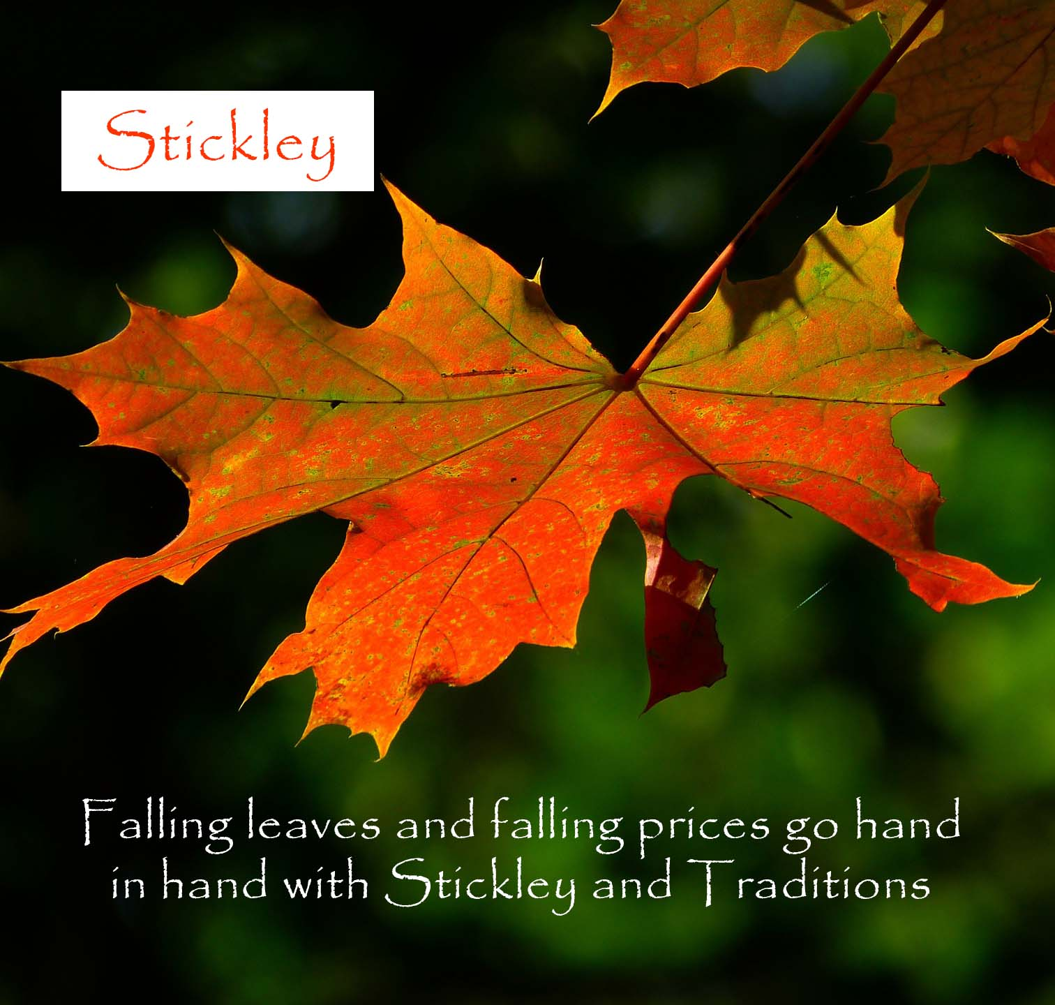 stickley fall sale leaves